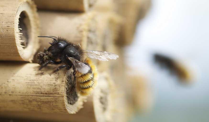 Les abeilles qui ne piquent pas